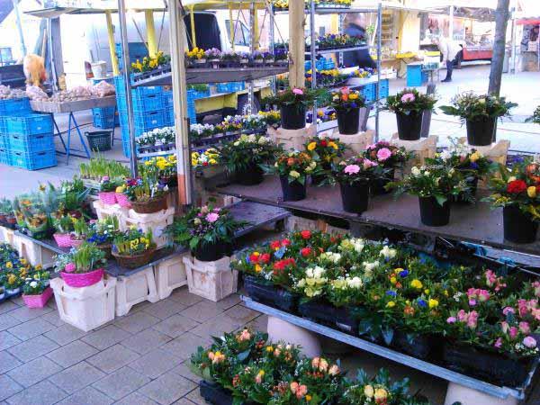 در زندگی آلمانی ها گل نقش مهمتری داره به نسبت ایران . صبح زود مغازه های گل فروشی زودتر از همه شروع به کار می کنند .