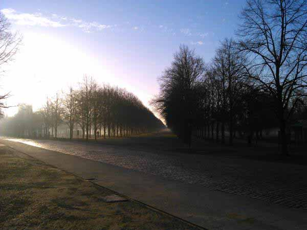 باغ در مه صبحگاهی