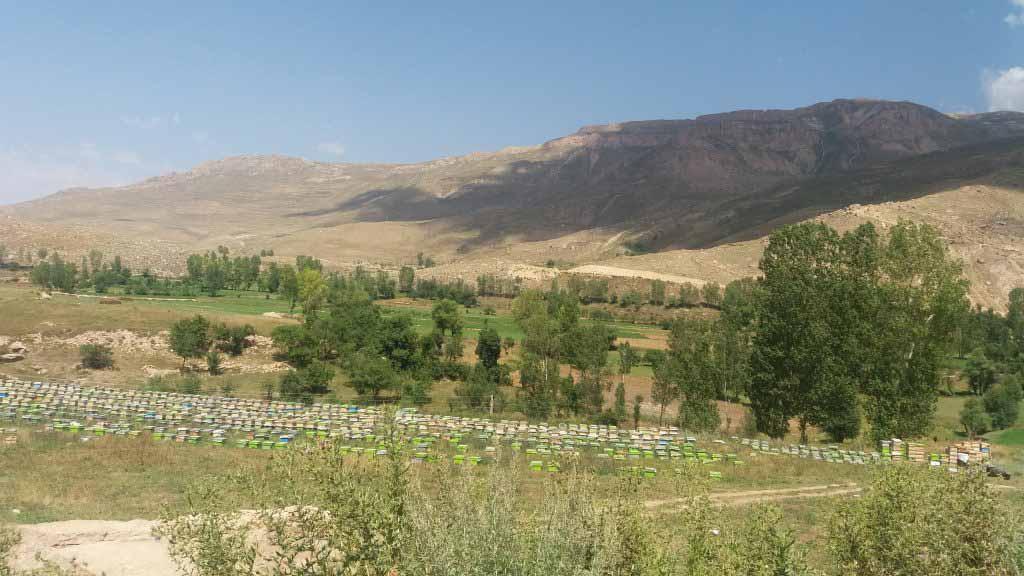 ورودی کوه کمر - نمایی از باغات و مزارع کوه کمر. کندوهای زنبور در کنار راه چیده شده