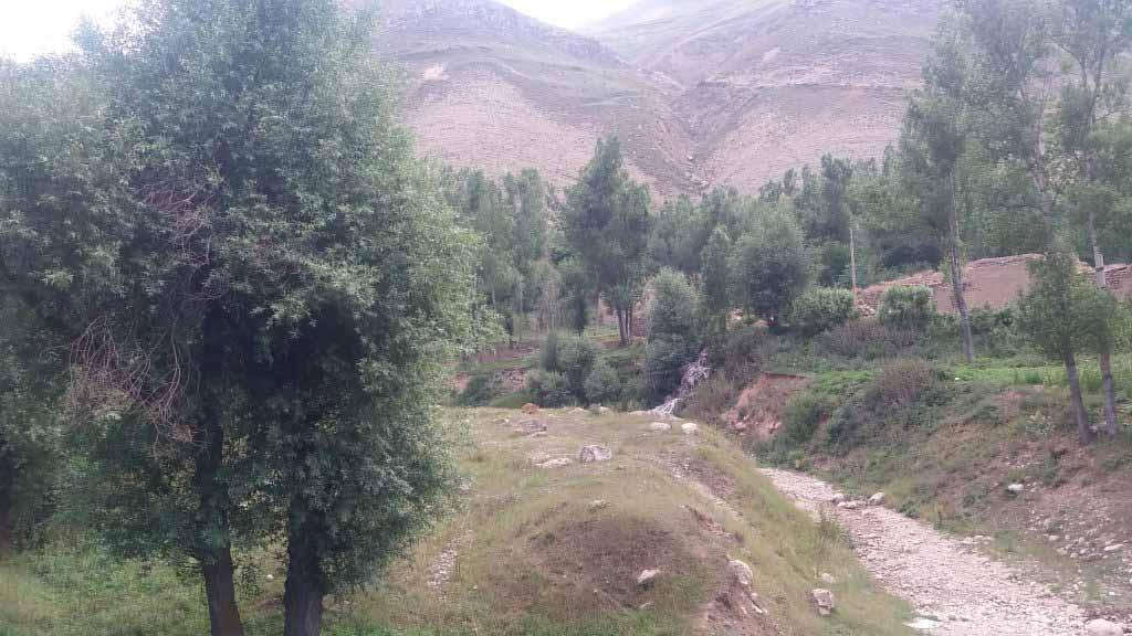 باغات کوه کمر
