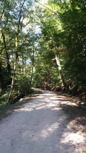 جاده ای در دل جنگل