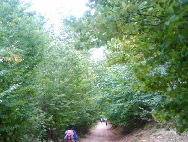 گذر از مسیرهای جنگلی