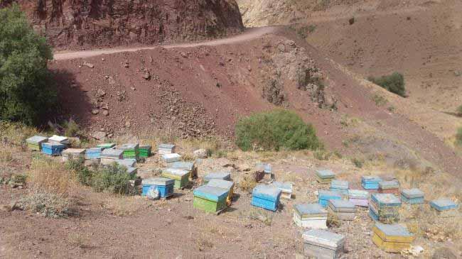 زنبورداری قبل از رسیدن به اسپی داران