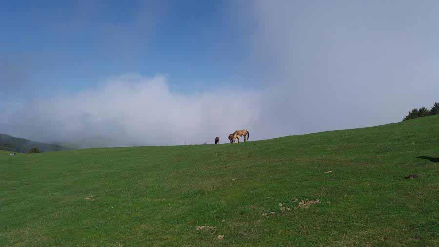 کره اسب های زیبا در دشت سبز