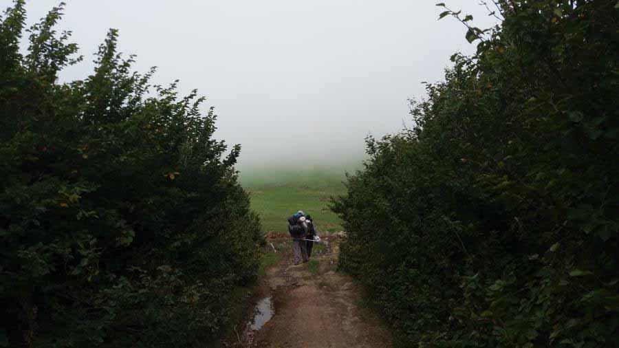 مسیر جنگلی کوتاه ابتدای مسیر و ادامه راه در چمنزارهای دامنه اسپیناس