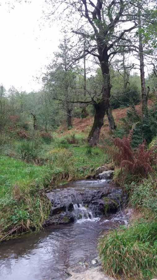 مسیر ییلاق به سمت آبشار