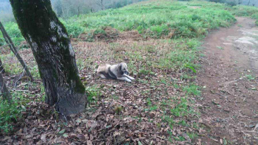 سگ با وفا تا آبشار با ما بود . در راه بازگشت از آبشار از ما جدا شد . احتمالا به ییلاق باز خواهد گشت تا گروهی دیگر را تا آبشار همراهی کند .