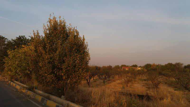 مسیر بعد از هشتگرد وارد فرعی شد که پر بود از باغ های میوه
