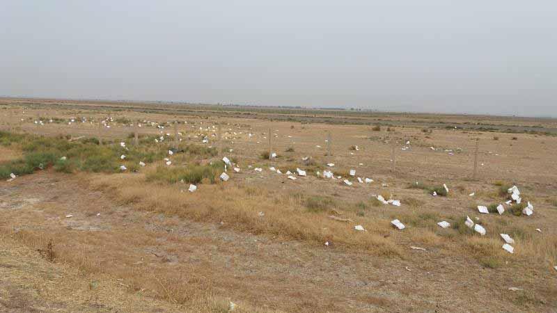 سهم ایندشت از نذورات و خیرات محرم ، پهنه وسیعی است که با زباله های ظرف های یکبار مصرف پر شده است .