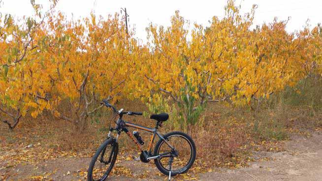 خوشامدگویی پاییزی تاکستان