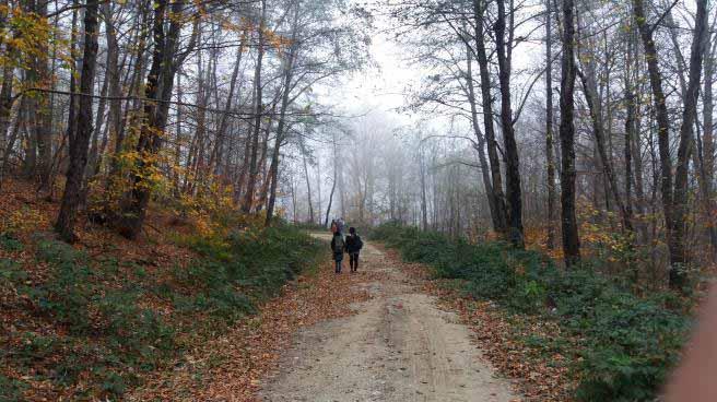 مسیر پیاده وری ، خاکی ولی کوبیده و خوب است. مخصوصا پاییز که فرشی از برگ هم پهن کرده اند .