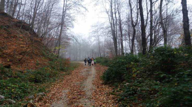 فضای جنگل ، سبز و نارنجی بود و با وجود مه ، رویایی شده بود .