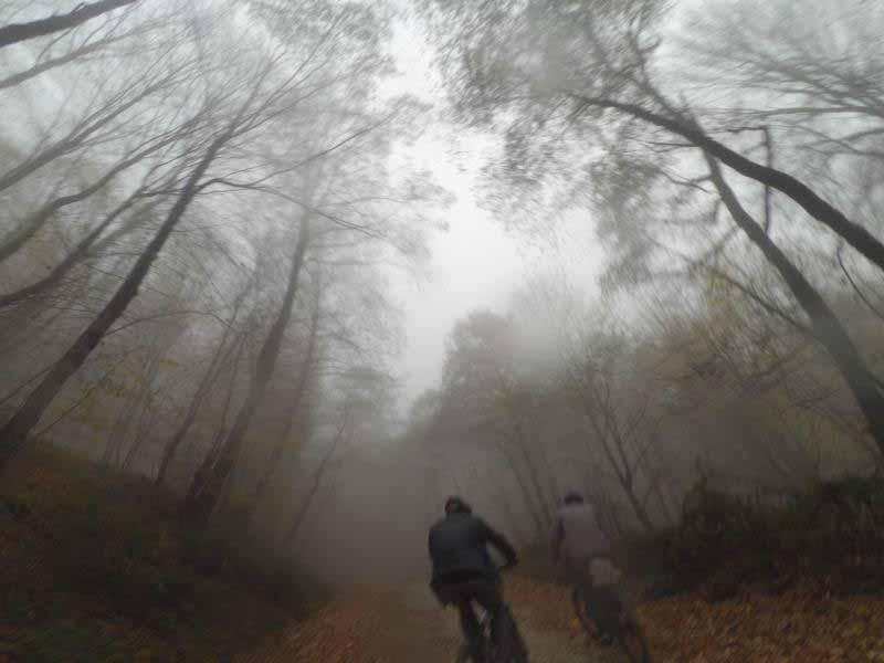 دوچرخه سواری در میان ابر و برگ