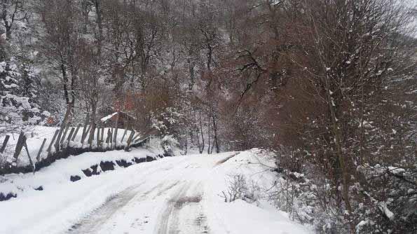 شروع جاده جنگلی - جاده پر برف تر شد .