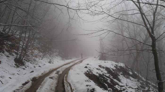 سفر در دل مه