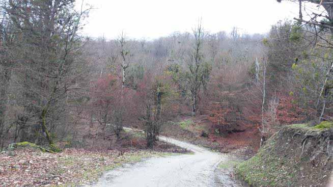 جنگل های پایین دست حتی در زمستان هم هزار رنگ اند