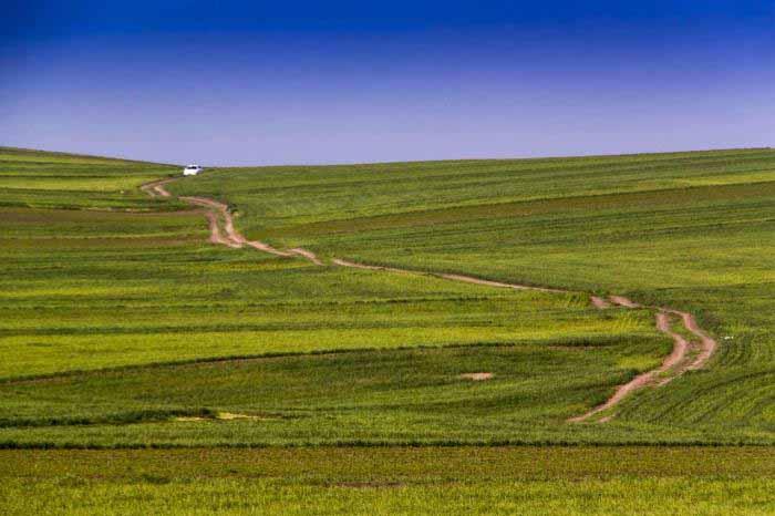 زیبایی های بی پایان دشت مغان - مزارع سرسبز گندم
